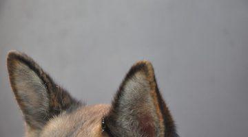 dog-3855333_640