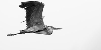 grayscale-photography-of-flying-bird-on-air-2049242