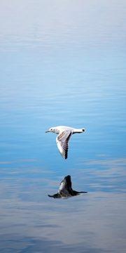 seagull-3890507_640